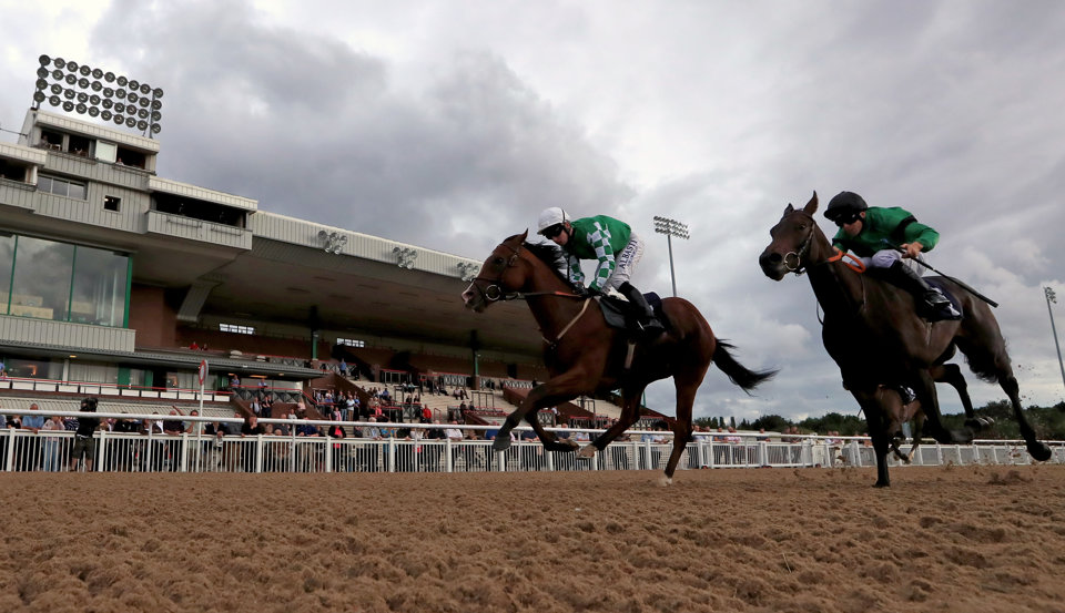 Our Napsters have tips for Wolverhampton and Plumpton today
