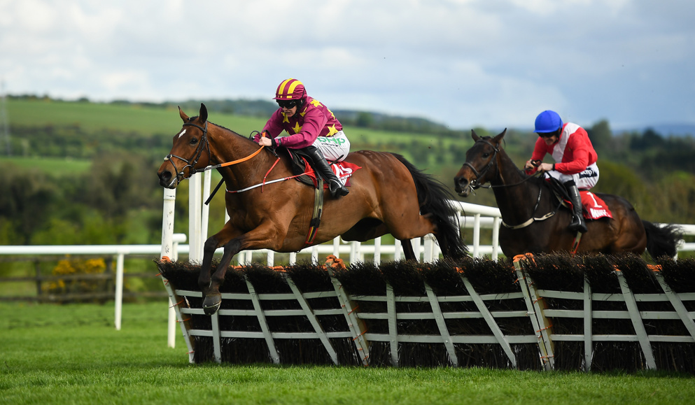 Minella Indo and Allaho were two stars of the Punchestown Festival.