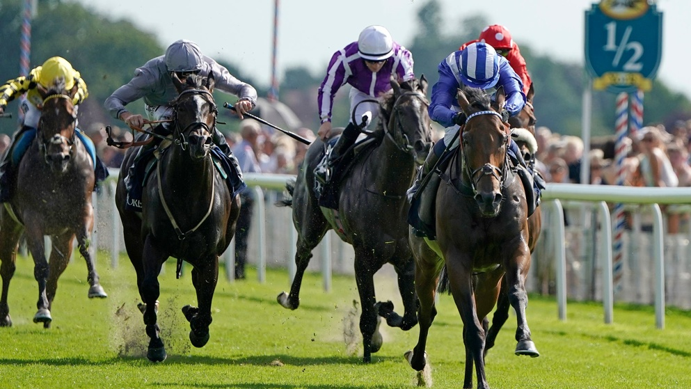 Nunthorpe stakes betting on sports racing post forecast betting system