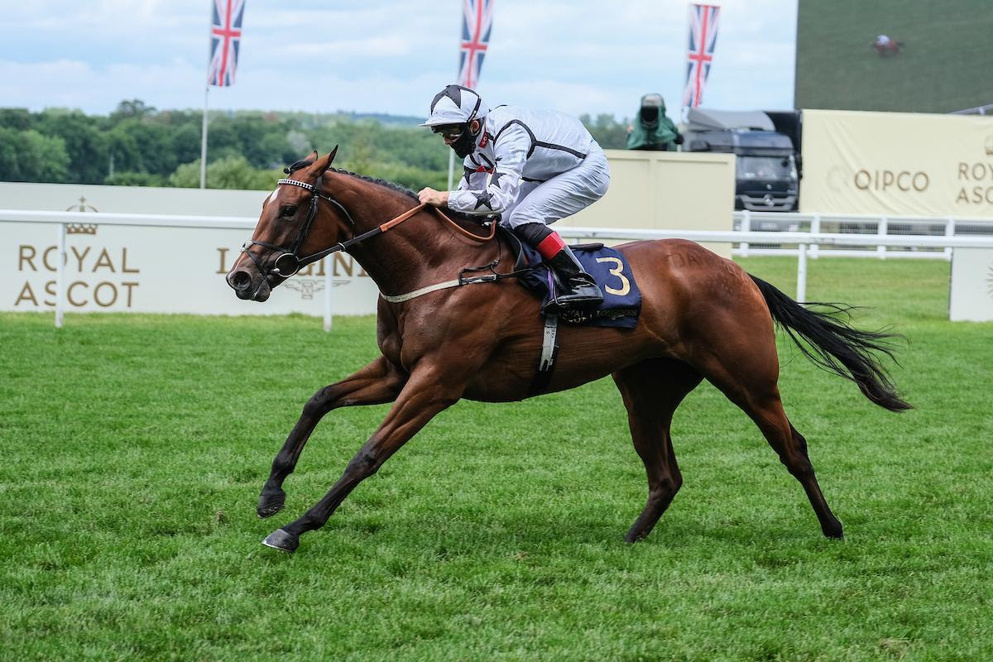 Dandalla stretched her unbeaten start to three with a determined display in the Group 2 Duchess of Cambridge Stakes.