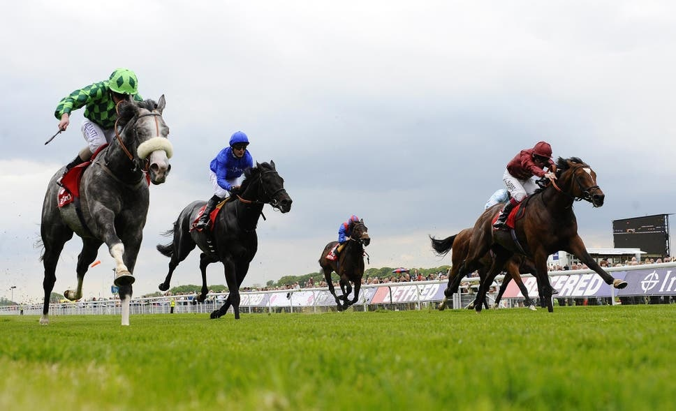 A host of smart performers have won the Dante Stakes, including The Grey Gatsby (left).