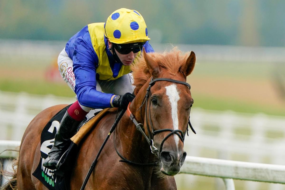Dream Of Dreams was an impressive winner of last month's Sprint Cup at Haydock.