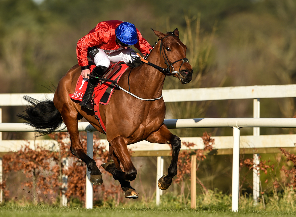 Envoi Allen is a red-hot favourite for the Ballymore Novices' Hurdle.