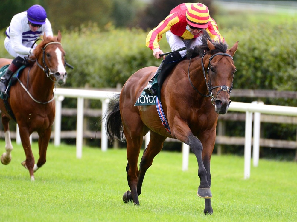 St Leger Tips: Galileo Chrome will be a lively player