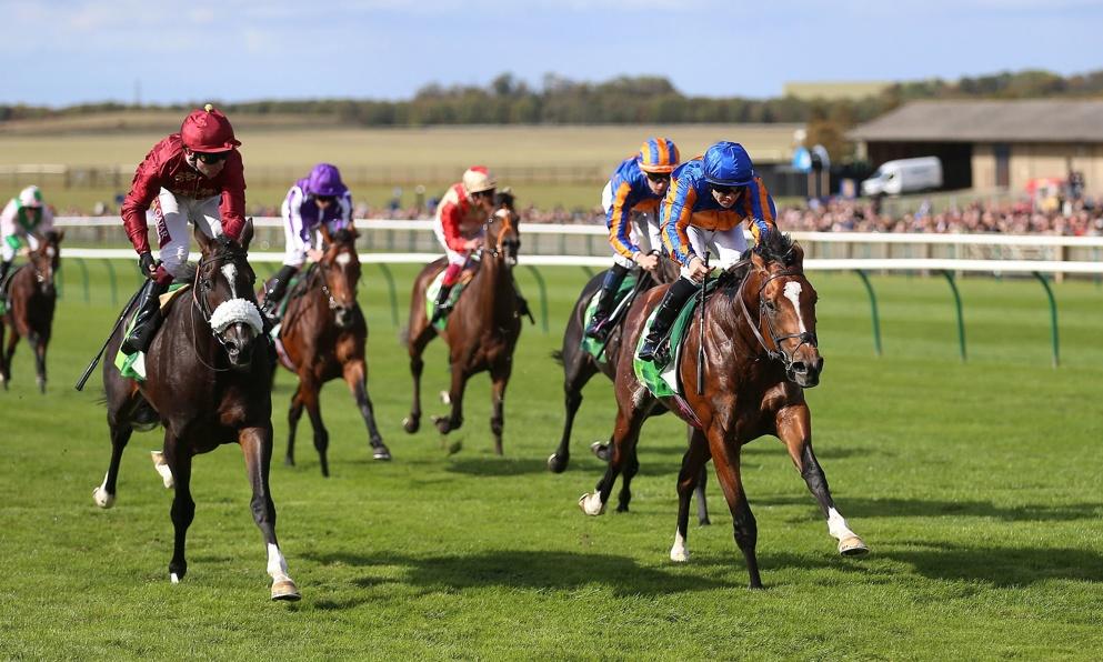 Qipco sussex stakes betting sites peer to peer sports betting uk