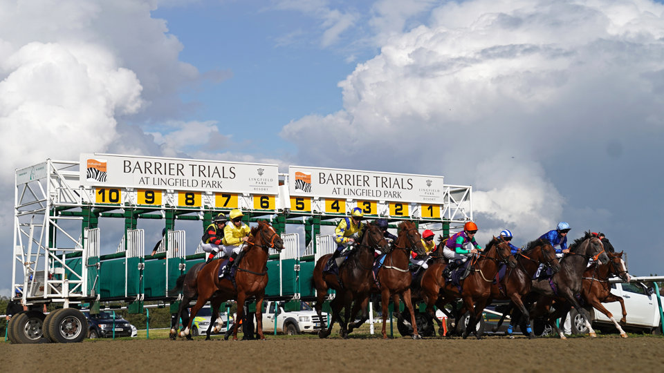 Chris has one selection at Lingfield this afternoon.