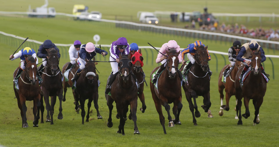 A classy field of sprinters will do battle in the July Cup at Newmarket.