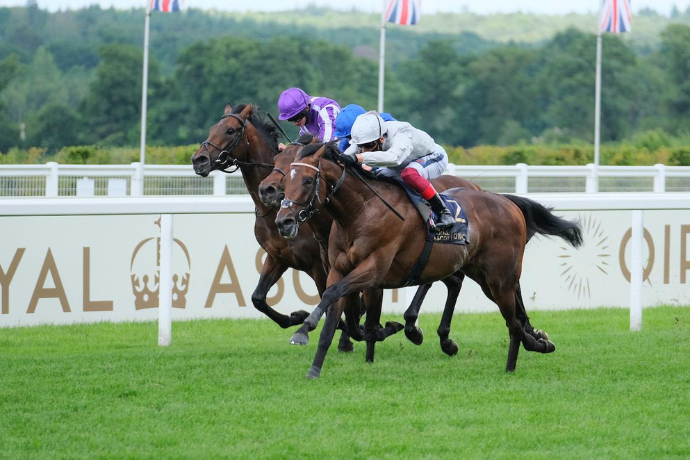 Palace Pier is a red-hot favourite for the Queen Elizabeth II Stakes on October 17.