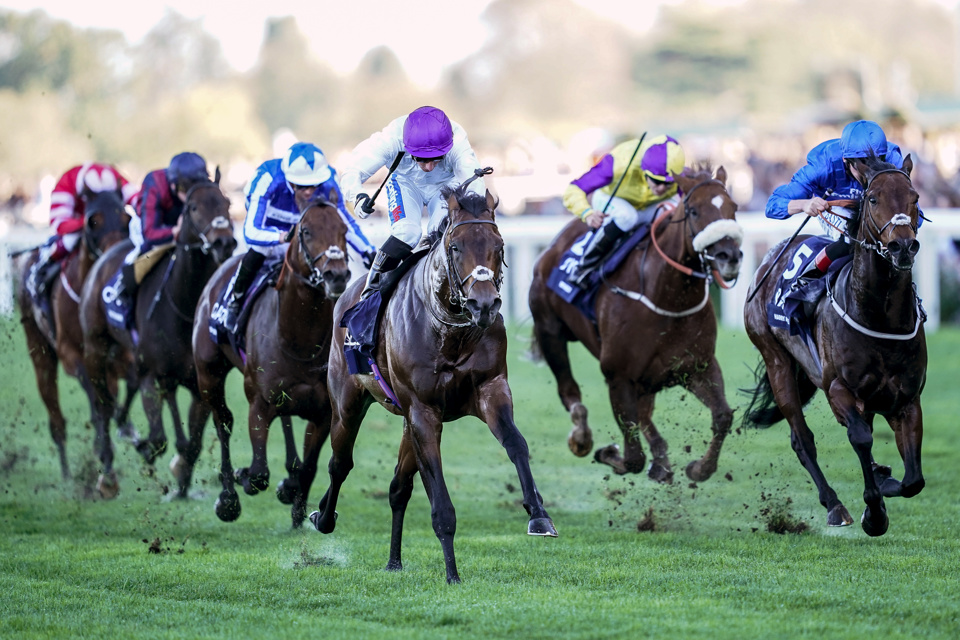 Ascot champions day betting trends ig markets spread betting login facebook