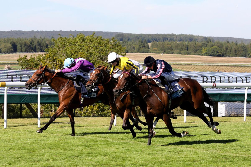 The Stewards' Cup is one of the most competitive handicaps of the season.