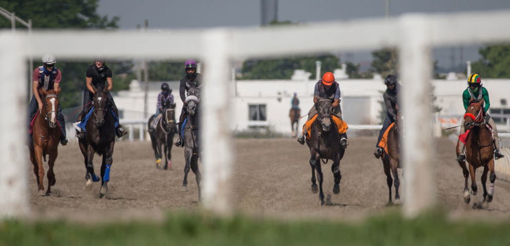 13 races on a big day up at Woodbine